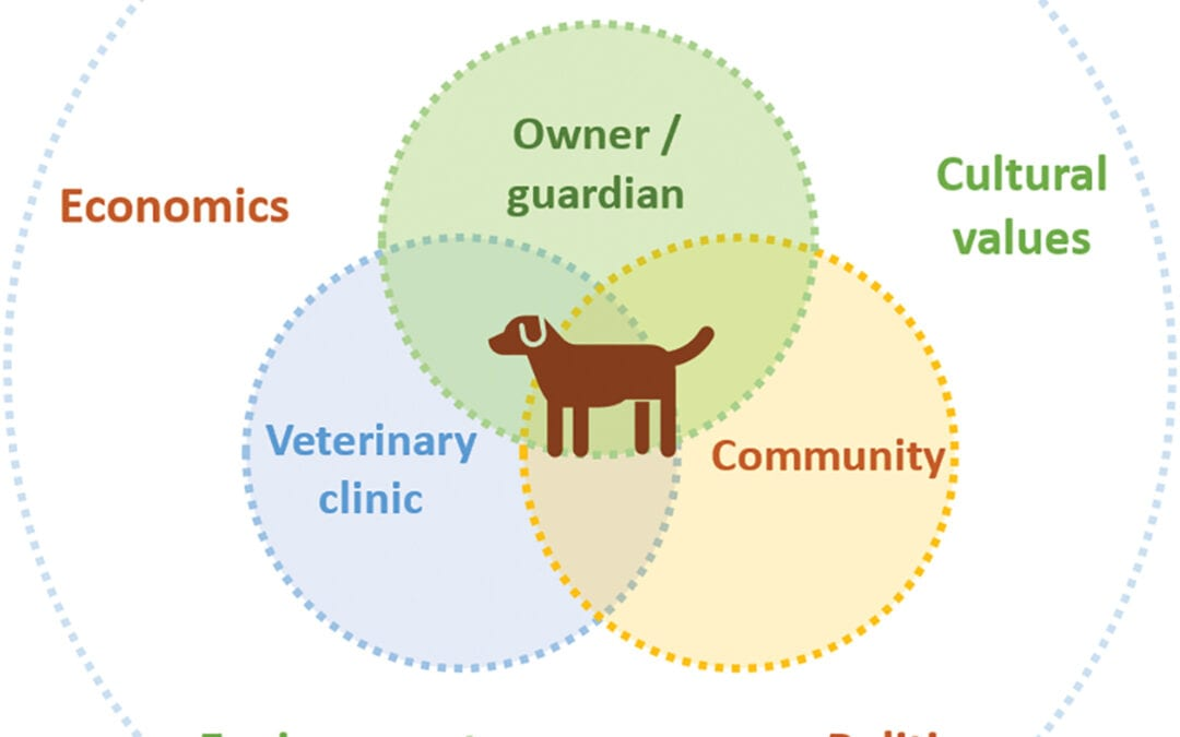 How to assess QOL in small animal practice.